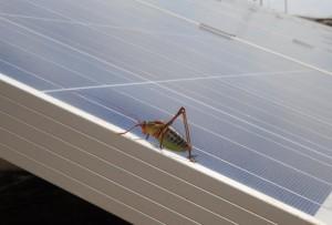 solarna-elektrarna-barban-1